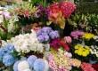 Fresh Flowers 1