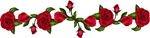 Rose_Border