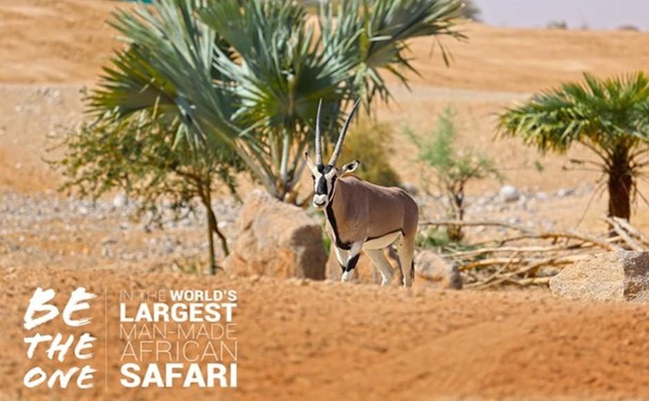 Al Ain Safari